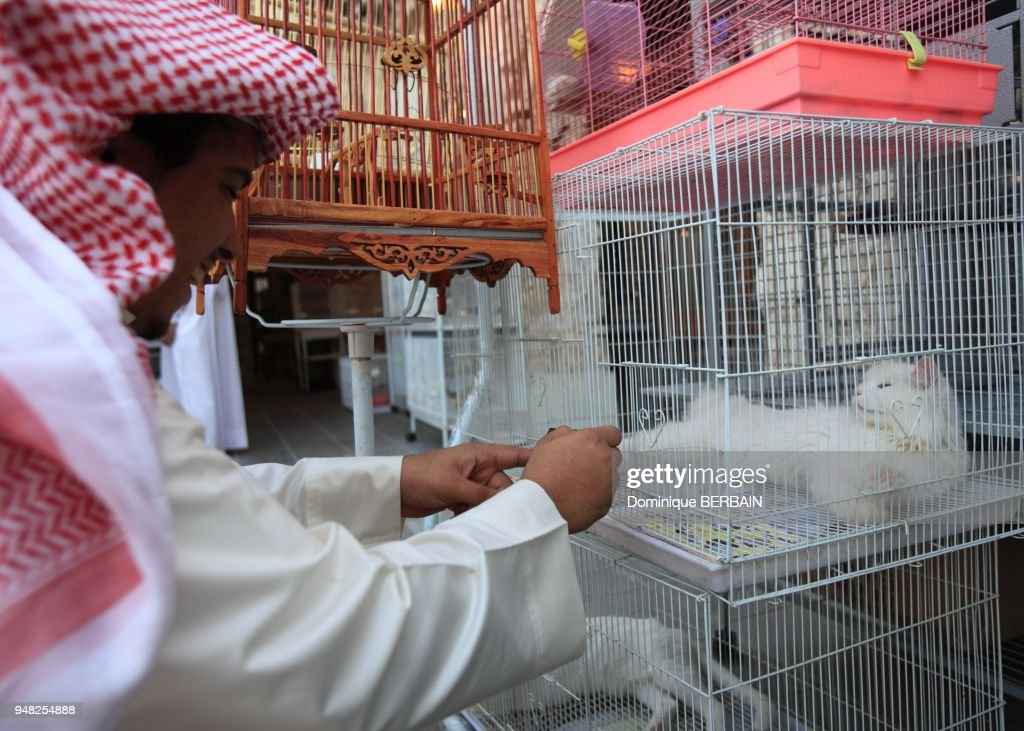 the qataris buy many animals at the souk mostly birds cats and