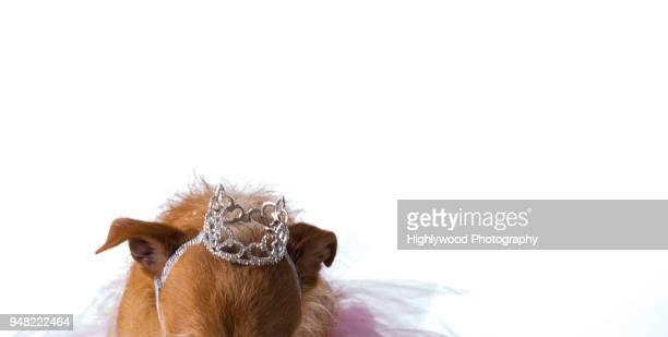 the queen bows - highlywood fotografías e imágenes de stock