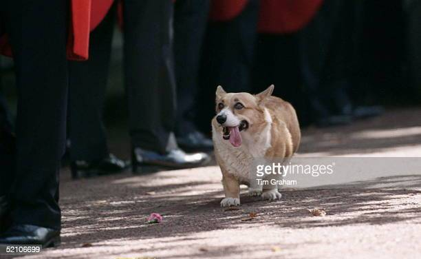 The Queen Mother's Corgi Outside Clarence House In London