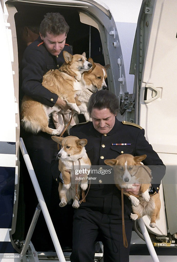 The Queen Mothers Corgis Arrive Back At Heathrow Airport, After The Summer Visit To Balmoral.