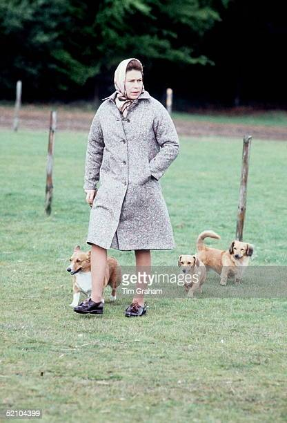 The Queen Walking Her Corgis In Windsor
