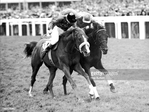 The Queen's racehorse Aureole ridden by Eph Smith wins the Hardwicke Stakes at Ascot 18th June 1954 On the right is Janitor ridden by Manny Mercer...