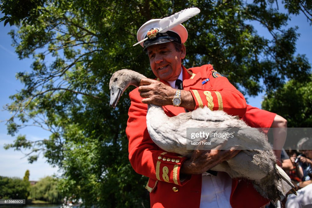 Annual Swan Upping Ceremony Takes Place On The River Thames : News Photo