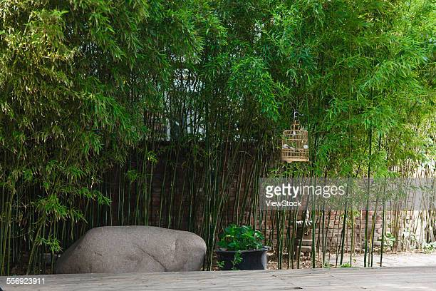 The quiet Chinese courtyard