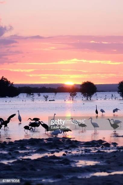 the quirimbas archipelago in mozambique - mozambique stock photos and pictures