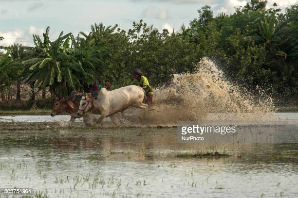 The race of theMoichara take place during the beginning of monsoon in a village near Namkhana west Bengal Moichhara means ladder on the field and...
