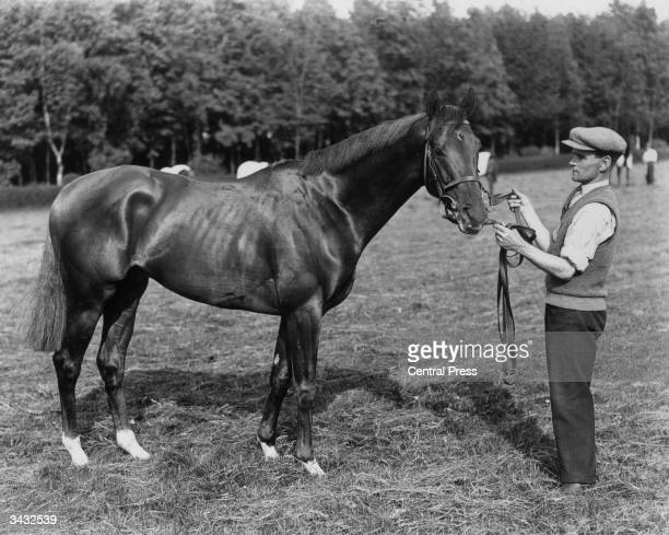 The racehorse and favourite for the Derby Hyperion