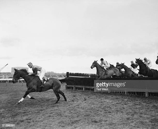 The racehorse Arkle ridden by Pat Taaffe in the lead before his victory in the Hennessy Gold Cup at Newbury 27th November 1965 Behind him are Game...