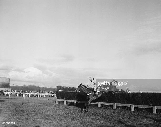 The racehorse Mandarin ridden by GW Robinson takes the final fence before winning the Hennessy Gold Cup at Newbury 25th November 1961