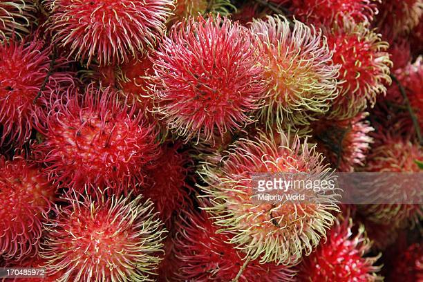 The rambutan is a mediumsized tropical tree in the family Sapindaceae and the fruit of this tree It is probably native to southeast Asia although its...