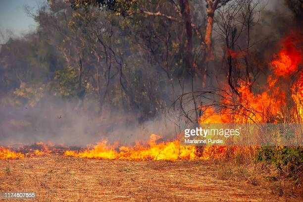 the ravages of fire in the bush - australia fire imagens e fotografias de stock