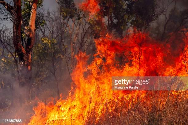 the ravages of fire in the bush - australian bushfire stock pictures, royalty-free photos & images