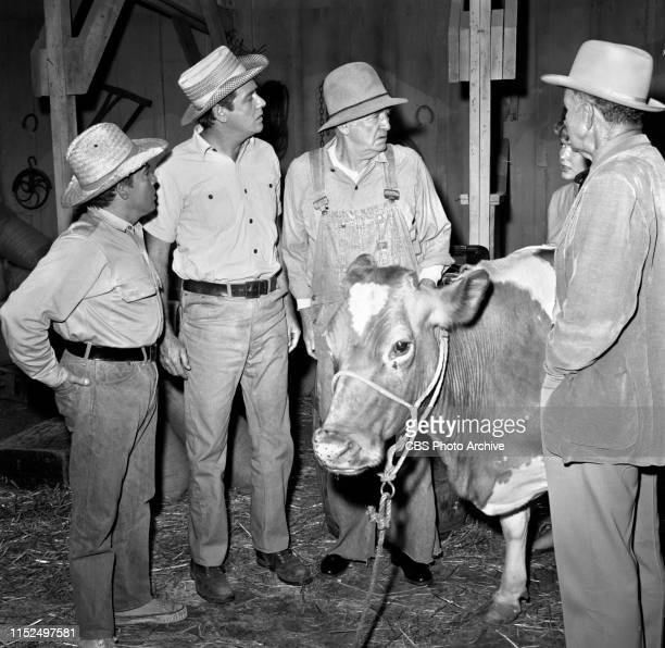 The Real McCoys a television rural comedy Episode The Girl Veterinarian Originally broadcast December 2 1962 Pictured from left is Tony Martinez...