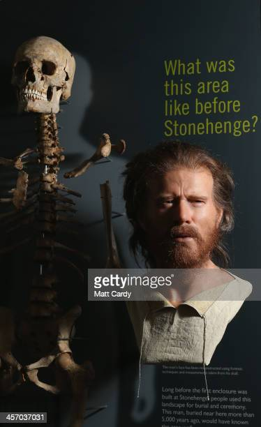 The reconstructed face of a Neolithic man is seen beside his skeleton inside the new Stonehenge visitor centre and exhibition on December 11 2013 in...