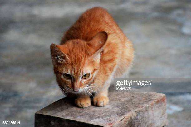 the red cat philippines - visage expressif stock photos and pictures