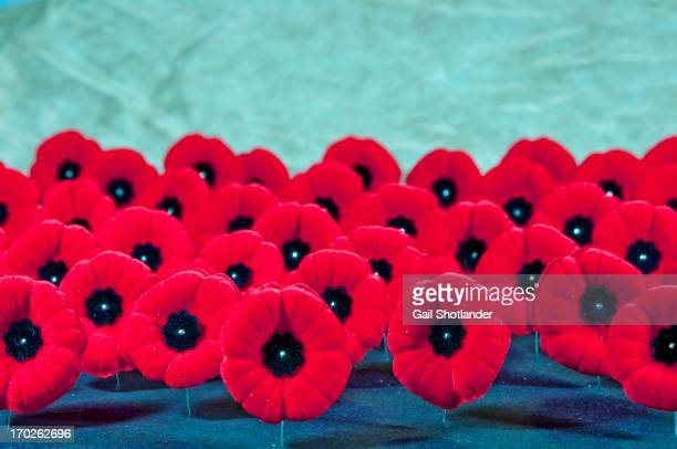The red poppy is a symbol of remembrance for all the men and women veterans who fought in war and conflict. The poppies are sitting on their pins,...
