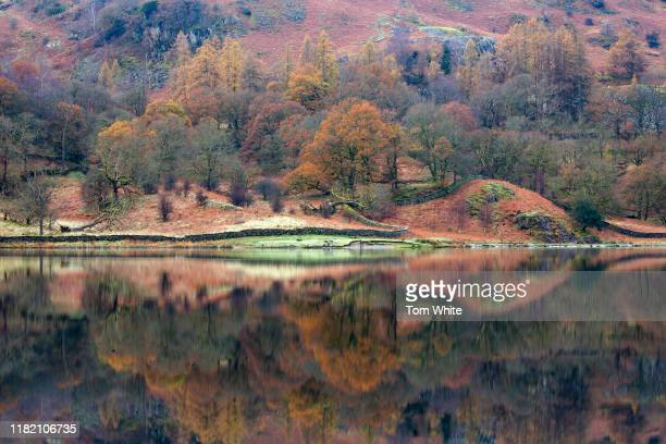The reds and oranges of autumn are reflected in Rydal Water in the Lake District on November 13 2019 in Ambleside England Temperatures continue to...