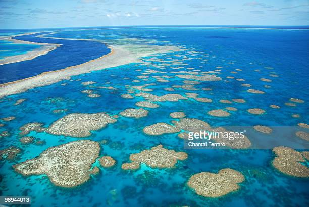 the reef, whitsunday islands, australia - great barrier reef stock pictures, royalty-free photos & images