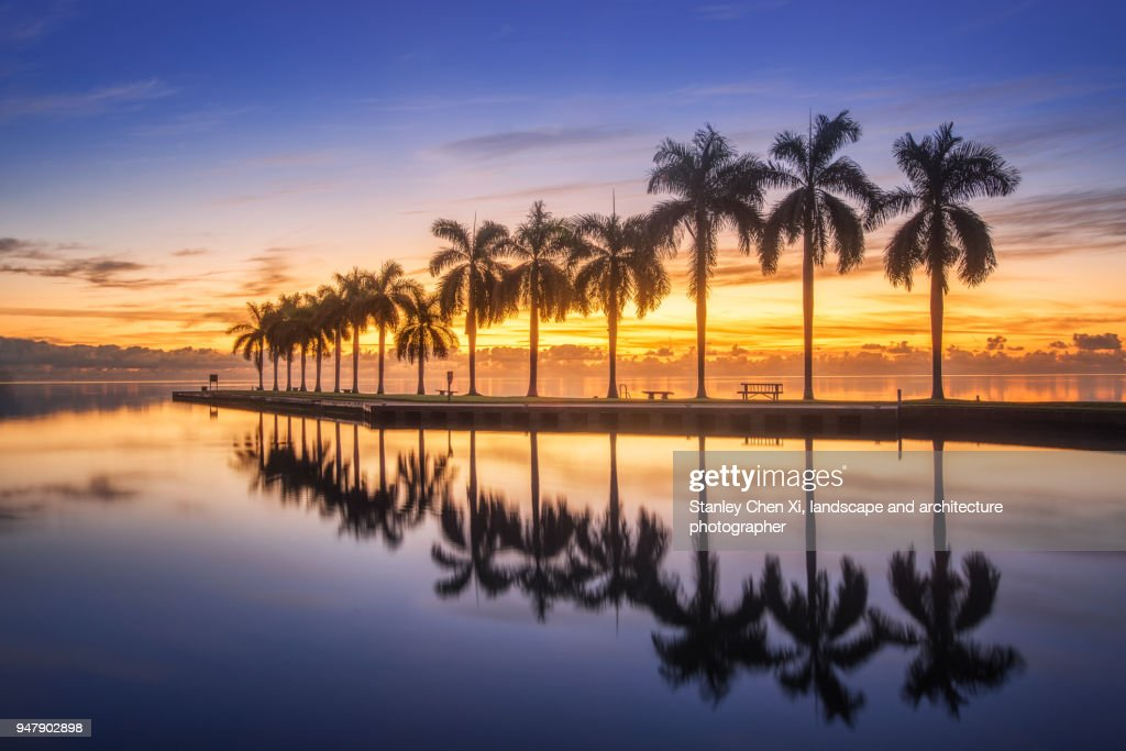The reflection of palm tree : Stock Photo