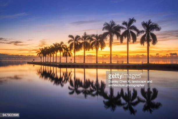 the reflection of palm tree - miami foto e immagini stock