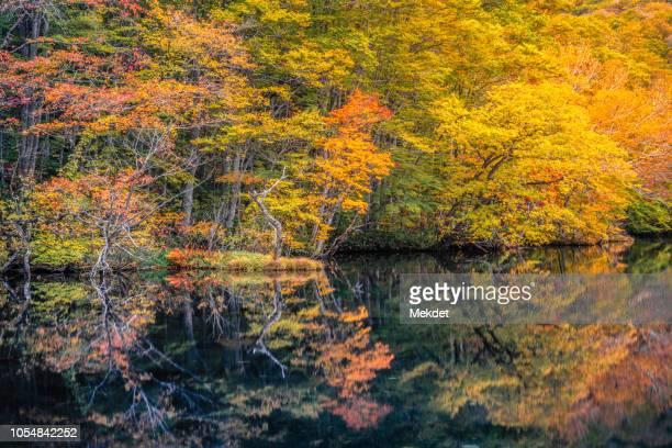 the reflection of tsutanuma pond with autumn foliage, towada, tohoku region, japan - aomori prefecture stock pictures, royalty-free photos & images