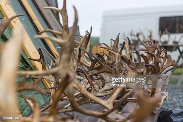 The Reindeer's Fate in Norway