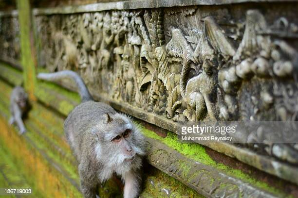 CONTENT] the relief at one of wall temple in sacred monkey forest sanctuary ubud