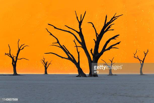 the remaining 5, deadvlei, sossusvlei, namibia - dead vlei namibia stock pictures, royalty-free photos & images