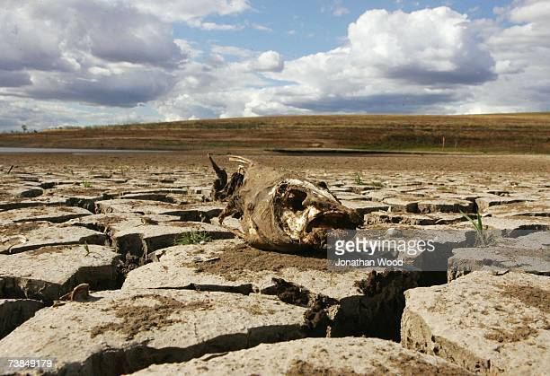 The remains of a fish lies on cracked ground at Wivenhoe Dam on April 10 2007 in Queensland Australia Wivenhoe Dam is a major source of water to the...