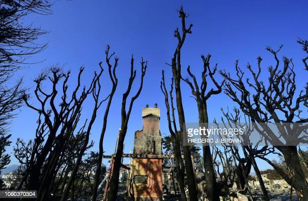 TOPSHOT The remains of a luxury home stand amid burnt out tree trunks in the beachside community of Point Dume in Malibu California on November 11 as...