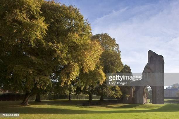 The remains of Glastonbury Abbey in Autumn splendor