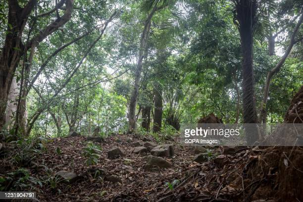 The remains of the slave fort in Dublin, on Sierra Leone's Banana Islands. The Banana Islands were once a slave trading port. They are now home to a...