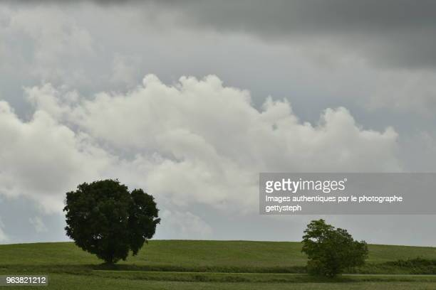 The remote two trees in middle cultivated lands under dark gray clouds