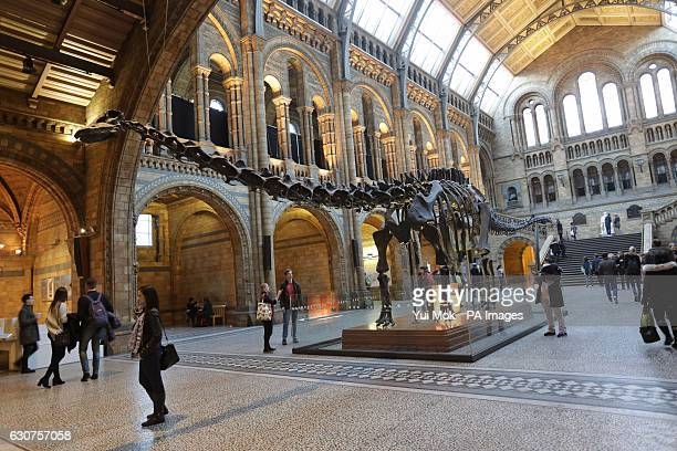 The replica model of Dippy the Diplodocus on display in Hintze Hall at the Natural History Museum London ahead of his nationwide tour as work begins...
