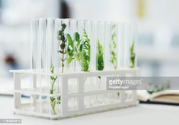 この実験の結果は興味深いものになるだろう - 薬草 ストックフォトと画像