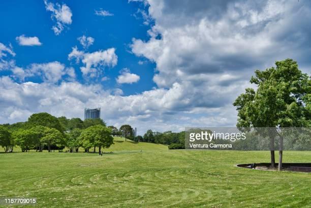 the rheinaue park in bonn - germany - bonn stock-fotos und bilder