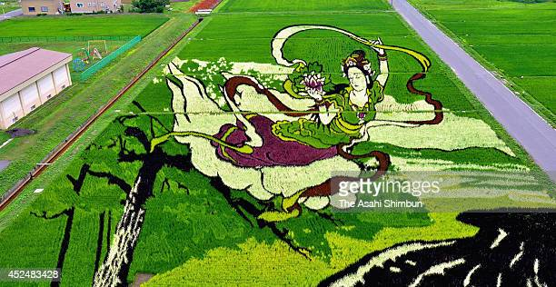 The rice paddy art of angel's dance is seen on July 14 2014 in Inakadate Akita Japan The art was drawn with ten different types of rice The event...