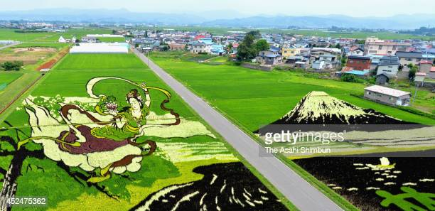 The rice paddy art of Mt Fuji and angel's dance are seen on July 14 2014 in Inakadate Akita Japan The art was drawn with ten different types of rice...