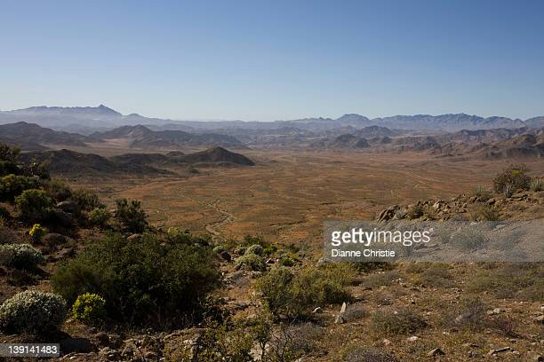 the richtersveld is located in south africa's northern namaqualand, this arid area represents a harsh landscape where water is a great scarcity and only the hardiest of lifeforms survive, northern cape province - ナマクワランド ストックフォトと画像