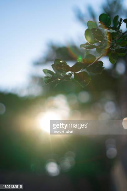 the rising sun and plants - branch stock pictures, royalty-free photos & images