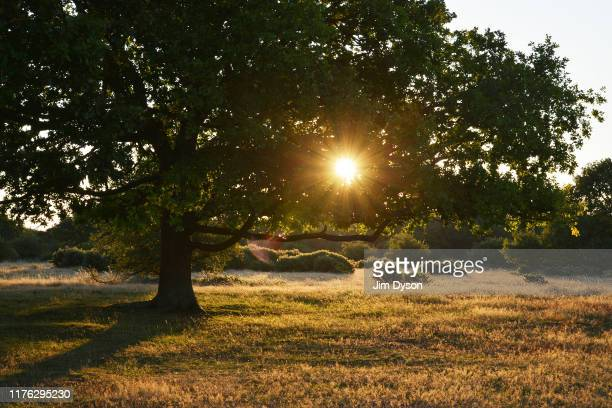 The rising sun shines through trees at Coombe Hill Buckinghamshire at sunrise on August 26 2019 in Ellesborough England
