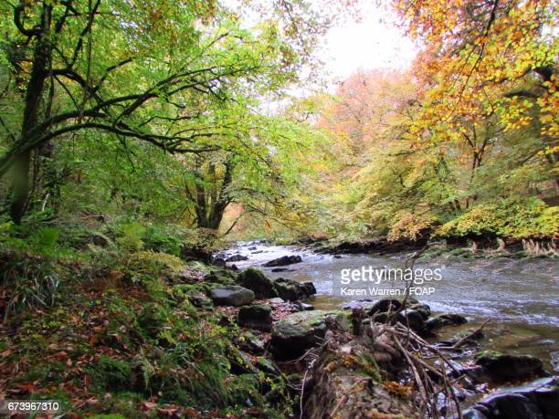 The river barle in autumn