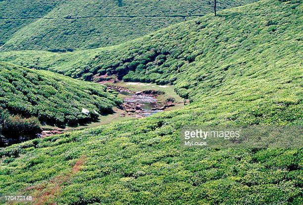 The river Periyar flowing through the center of this town nourishes its vast tea coffee and pepper plantations home to a number of tea factories...