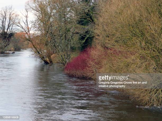 the river suir - gregoria gregoriou crowe fine art and creative photography stock photos and pictures