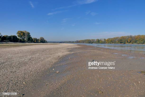 the riverbed of the river rhine - rhine river stock pictures, royalty-free photos & images