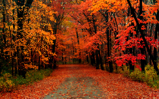 The road covered with autumn leaves 1162998852