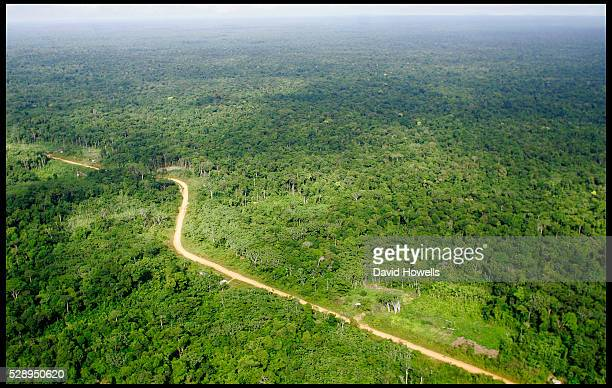 The road from Port Kaituma about 1 mile from the site of present day Jonestown Guyana where the Jim Jones mass suicide occurred in which over 900...
