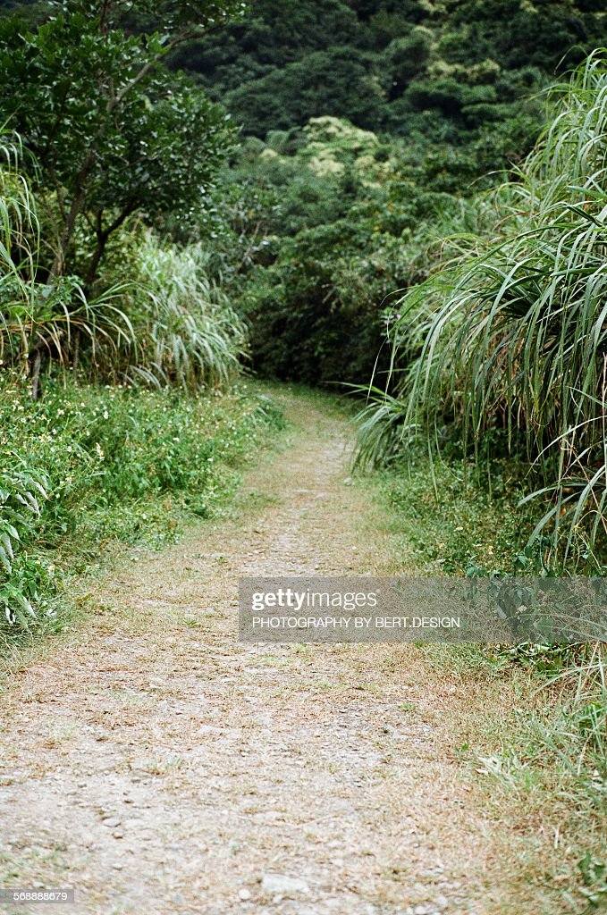 The road in the mountain : Stock Photo