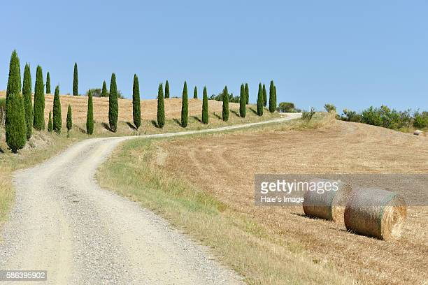 the road in tuscany with cypress, italy - italian cypress stock photos and pictures