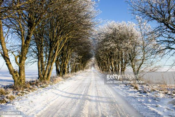 the road less travelled - sonne stock pictures, royalty-free photos & images